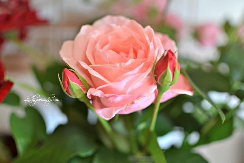 pinkroses1